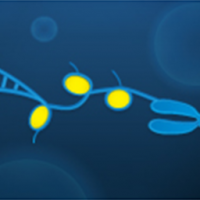 Cell-Based and Biochemical Assays