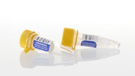 Avian Myeloblastosis Virus