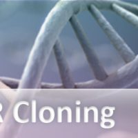 pcr-cloning-subcategory_512x256