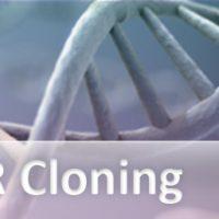 PCR Cloning