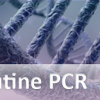 routine-pcr-subcategory_512x256